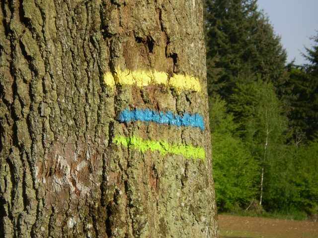 http://i62.servimg.com/u/f62/09/02/08/06/p5130712.jpg