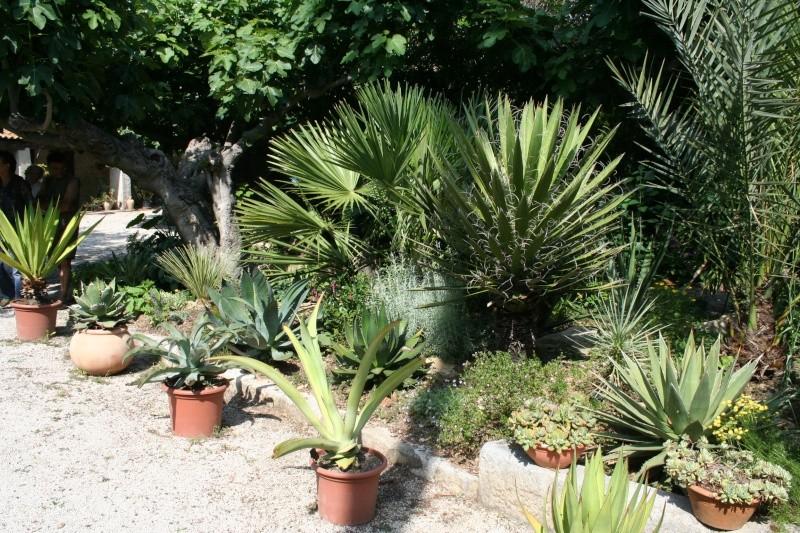 fabuleux jardin de succulentes prs de toulon jean06. Black Bedroom Furniture Sets. Home Design Ideas