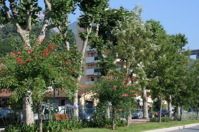 Alignements et arbres remarquables menton ce matin for Le divan 09 02 16