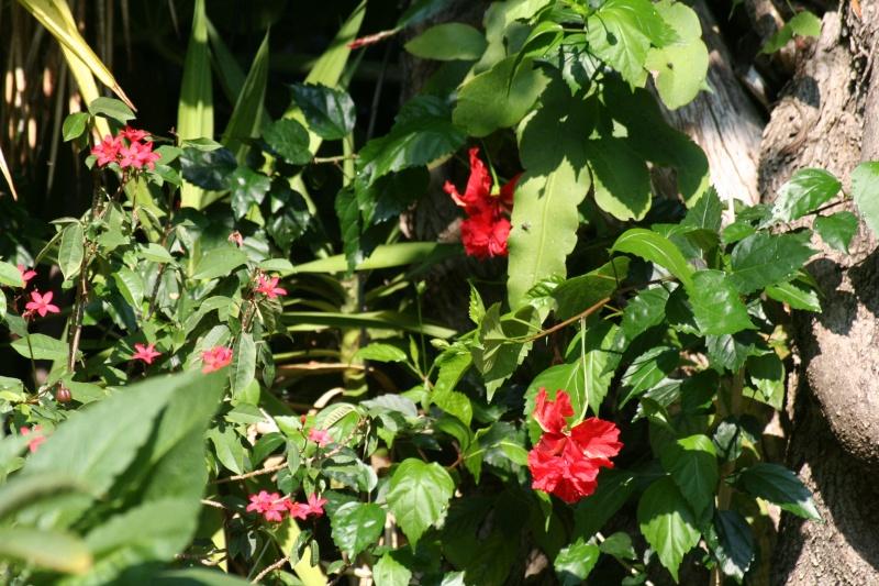 quelques photos de plantes en fleurs en ce moment page 2. Black Bedroom Furniture Sets. Home Design Ideas