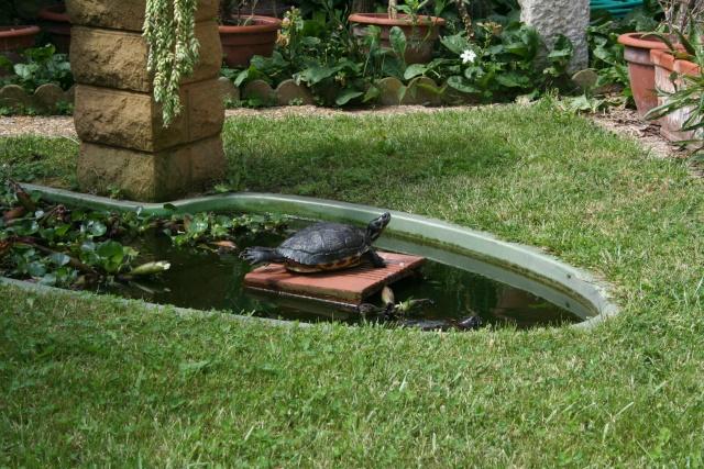 Surprise chez mes tortues de floride for Bassin exterieur pour tortue