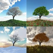 sal des saisons
