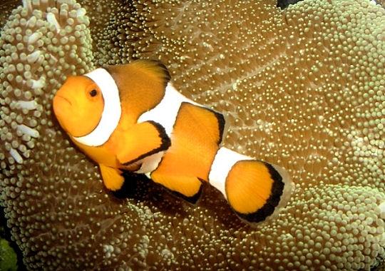 15 poissons color s for Poisson clown prix
