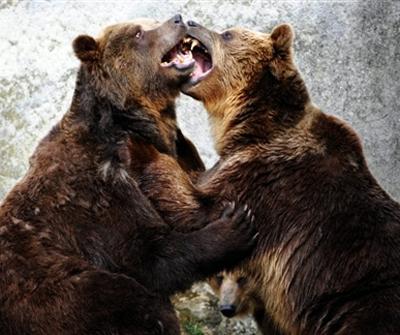 Rencontre amoureux des animaux