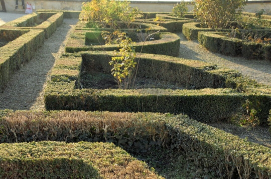 Jardin les jardins de boboli - Haie de buis hauteur ...