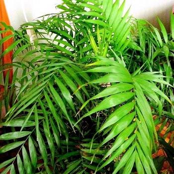 Jardin plantes d 39 int rieur plantes d polluantes for Plante d interieur retombante