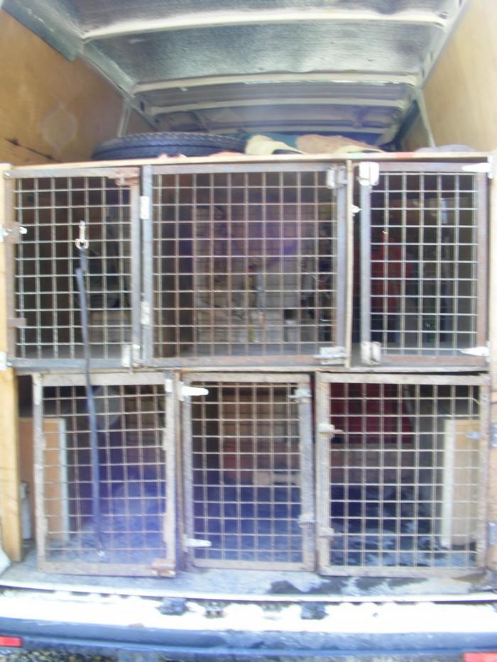 quel vehicule pour transporter vos chiens page 3. Black Bedroom Furniture Sets. Home Design Ideas