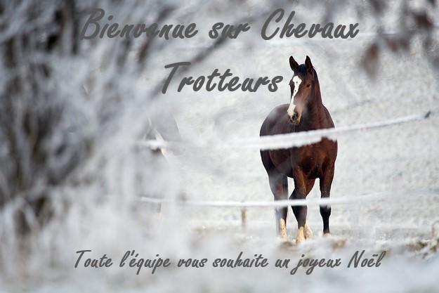 Chevaux Trotteurs