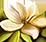 [Image: fleur10.png]
