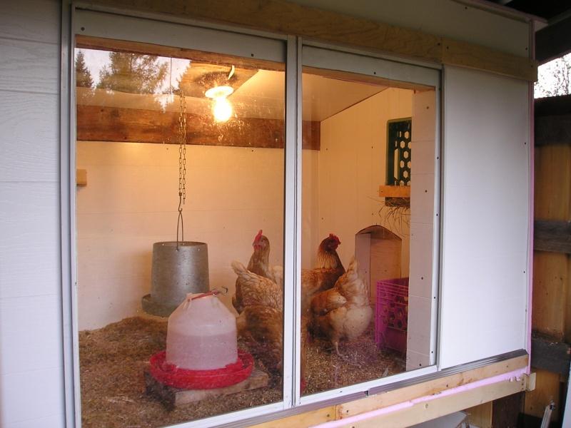3 poules dans un cabanon - Interieur d un poulailler ...