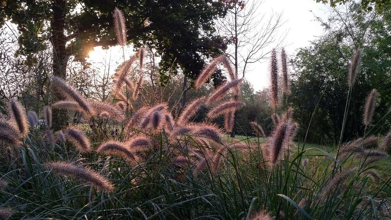 Le parcours dans Chroniques d'un Gourou jardin10