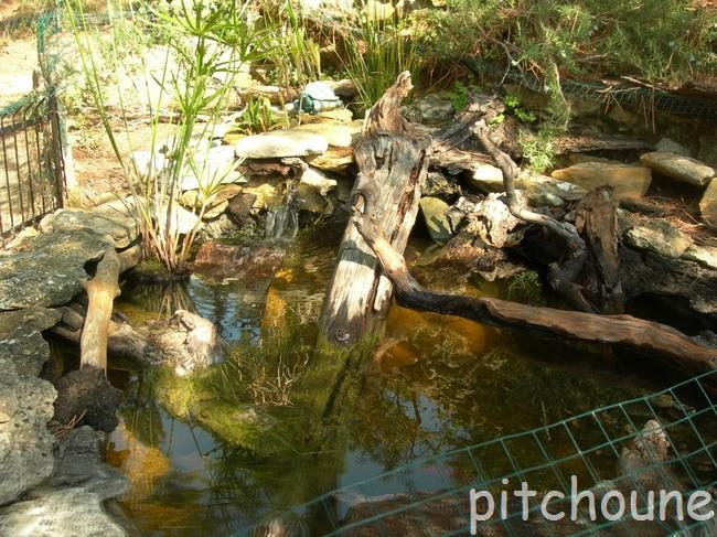 Notre bassin pour tortues page 2 - Bassin pour tortue aquatique villeurbanne ...