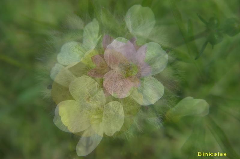 Une fleur se cache.... dans Creations flous_10