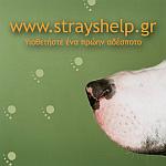 Strays' help