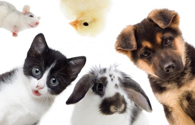 Nos amis les z'animaux