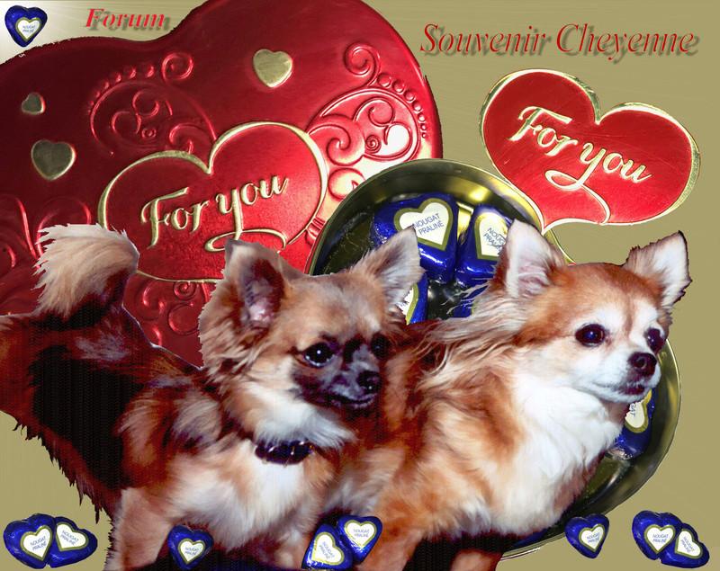 Chihuahuas Souvenir Cheyenne Forum