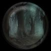 Forêt de Pierre Noire