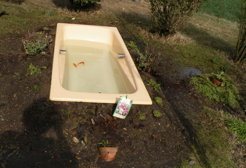 Ma baignoire en bassin for Prix poisson rouge jardiland