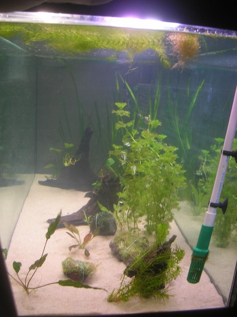 Mon bac 240l nouvelles photos p3 for Acheter des plantes