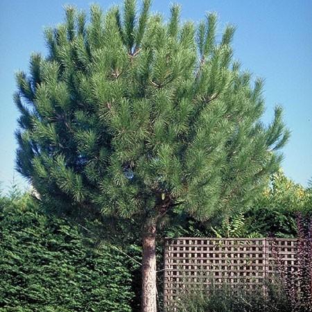 Le plus bel arbre du jardin for Les arbres du jardin