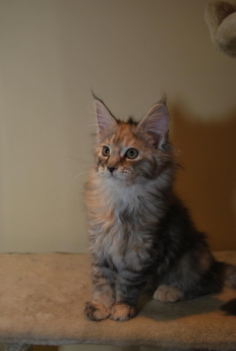 chaton15