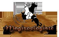 Adulte Magizoologiste