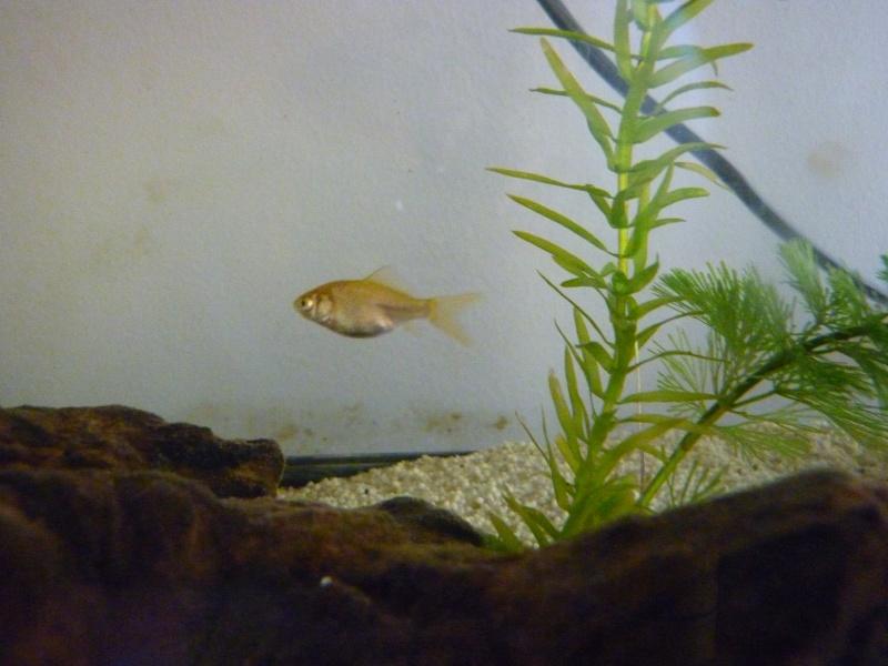 Donne poissons rouges de 4 mois 95 for Donne poisson
