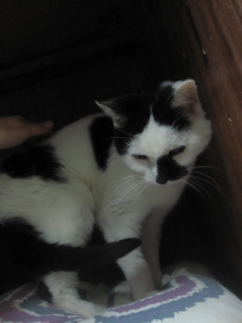 Noir bite dans la chatte gros plan photos Blanc