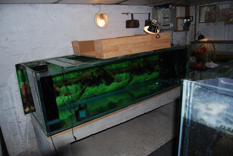 Aquarium pour tortue de floride for Achat grand aquarium