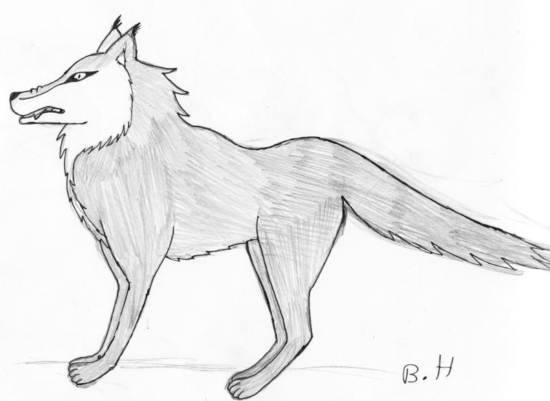 Comment dessiner des loups - Image loup dessin ...