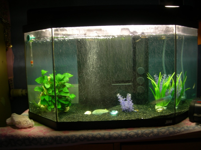 mon aquarium de 50 litres. Black Bedroom Furniture Sets. Home Design Ideas