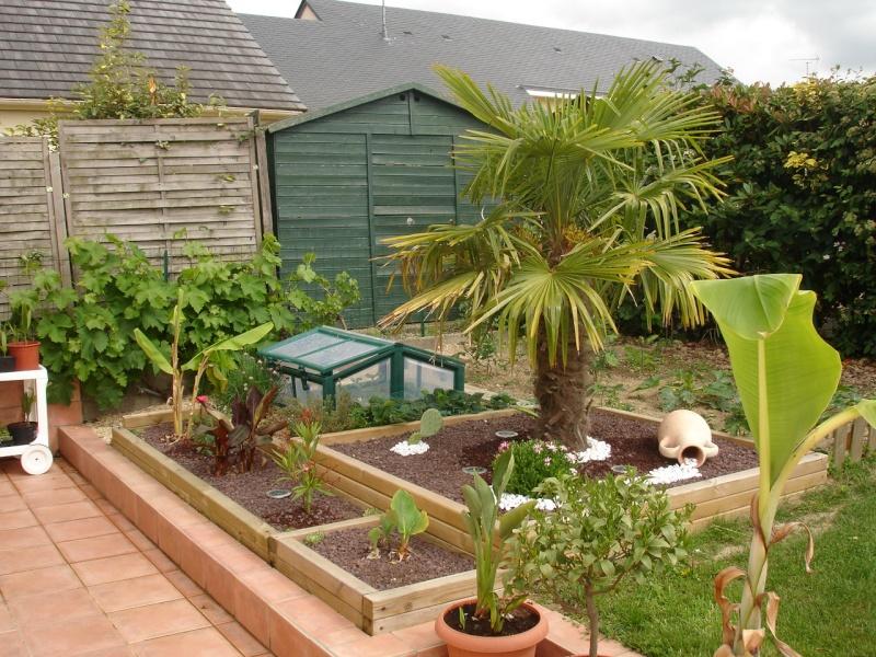 Le forum des fous de palmiers 53 mon petit jardin en for Petit jardin contemporain