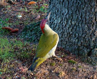 Belles photos d 39 animaux sauvages page 33 for Oiseaux des jardins belgique