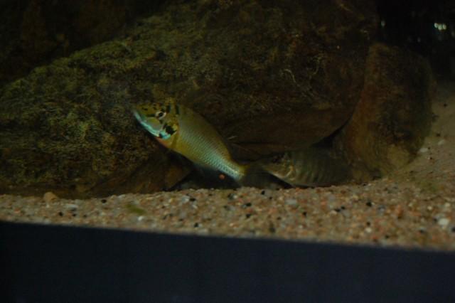 Bacs z 39 et poissons de ptitseb for Grand bac a poisson