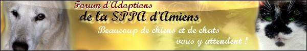 SPA Amiens