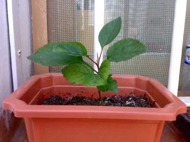 Me gustar a crear un bonsai for Bonsai comprare