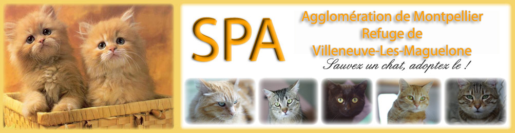 Spa Montpellier Chat