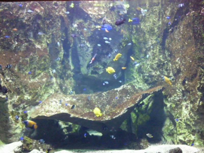 Re: [Visite] Aquarium du grand Lyon le Mer 18 Ao? 2010 - 22:59