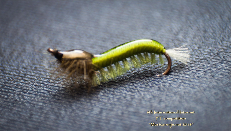 MILAN_DJURI_Rhycophila21
