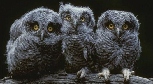 Это форум о природе и диких животных