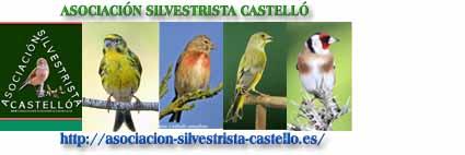 ASOCIACIÓN SILVESTRISTA CASTELLÓ