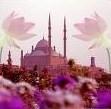Actualités concernant l'Islam et les musulmans