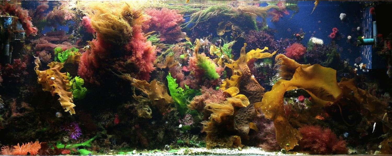 Macro Reef