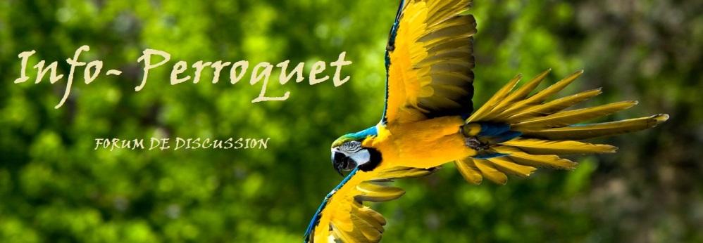 Info-Perroquet