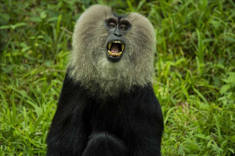 Parodontose. Zahnfleischerkrankungen (Parodontitis)