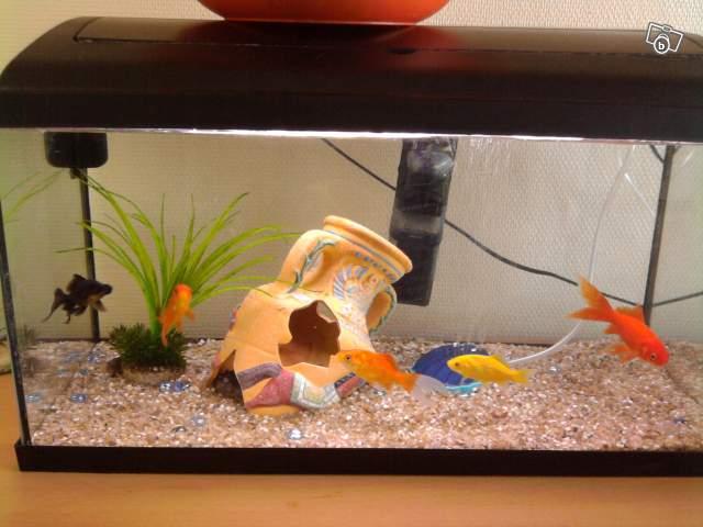 Aquarium 54 litres for Aquarium petit prix