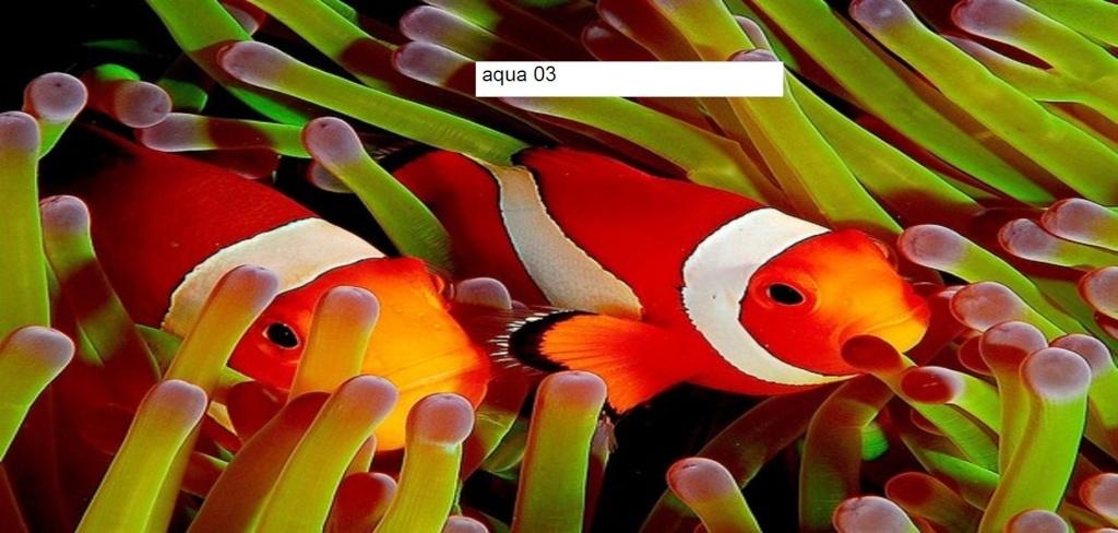 Aqua03 portail for Site aquariophilie