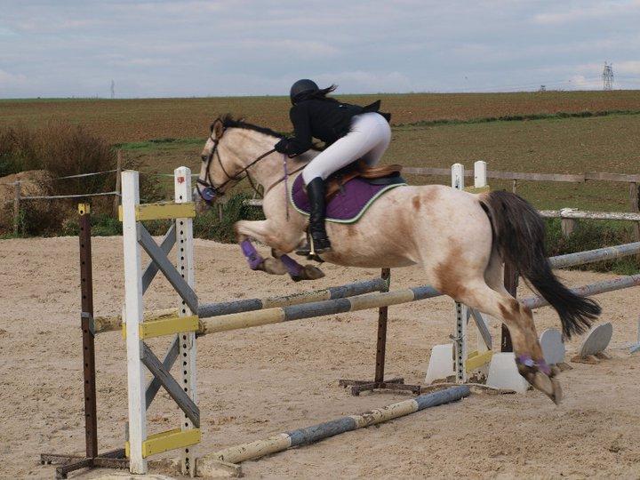 cheval espagnol qui saute