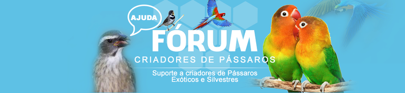 CLUBE DOS PASSARINHEIROS