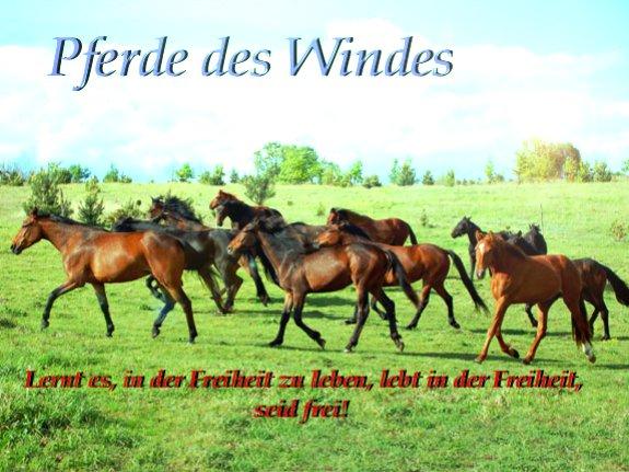 Pferde des Windes